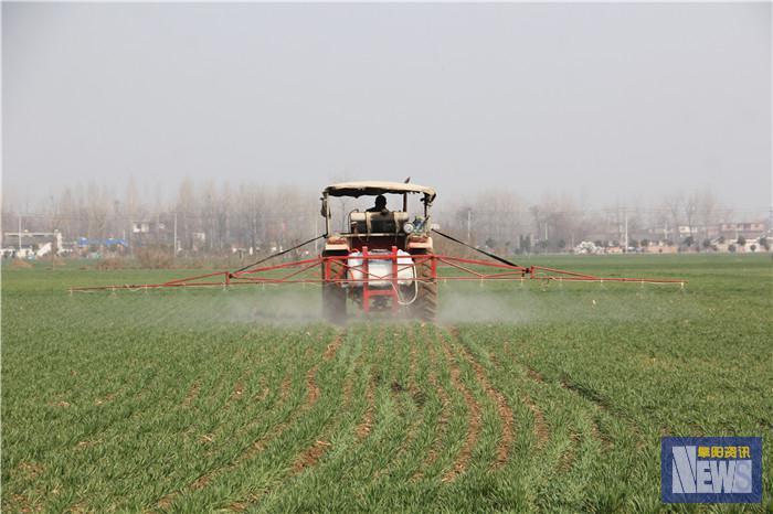 光武镇:小麦正返青 除草正当时