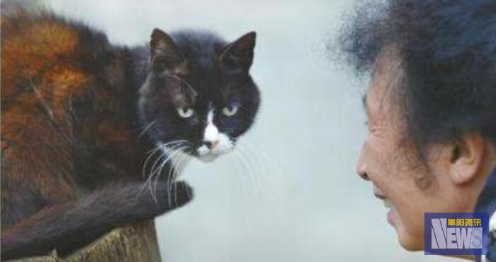 人去世时,为啥不能让猫接近尸体,不是迷信,有科学依据