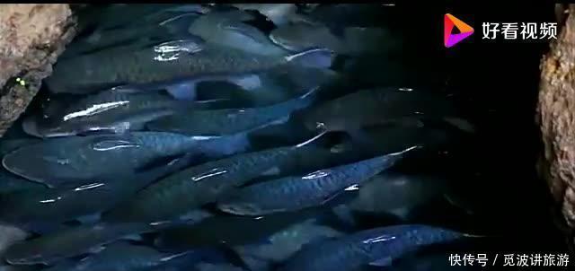 """泰国发现""""仙洞"""",里面全是肥鱼却无人捕,当地人:太肥"""