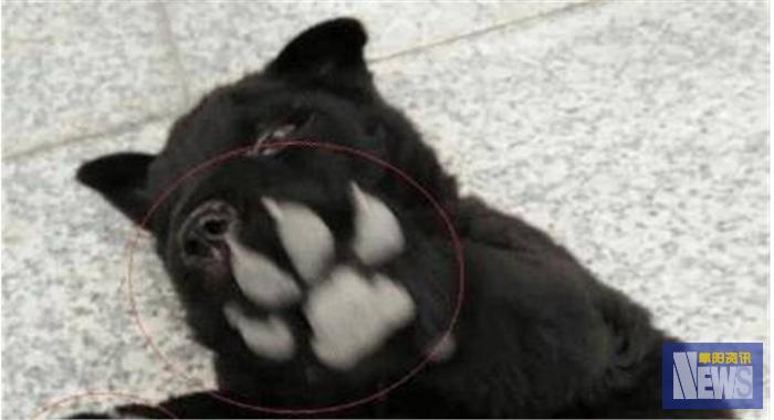 女子在狗市买回一只小黑狗,发了一张朋友圈后,直接送