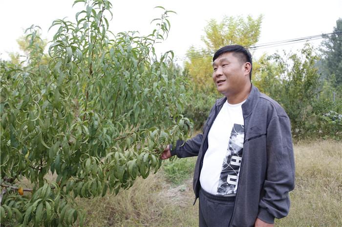 <strong>阜阳紫荆农业发展黄金蟠桃种植 规模效益日渐提升</strong>